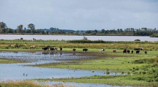 Op safari door het moeras